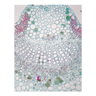 Cotton leaf under the microscope letterhead