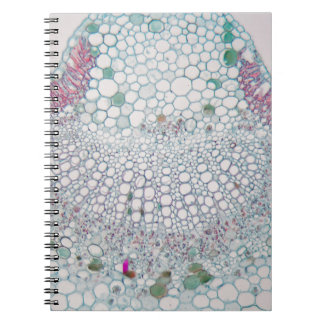 Cotton leaf under the microscope notebook