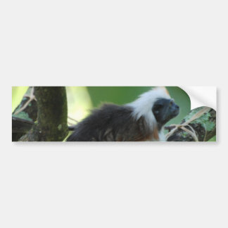 Cotton Topped Tamarin Bumper Stickers