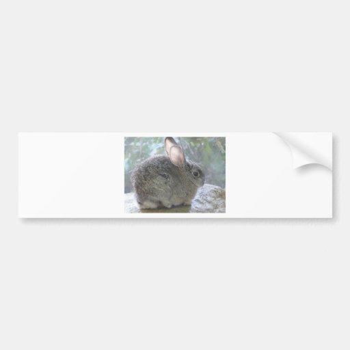 cottontail rabbit bumper stickers