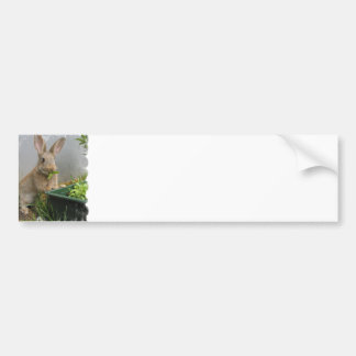 Cottontail Rabbit Bumper Sticker