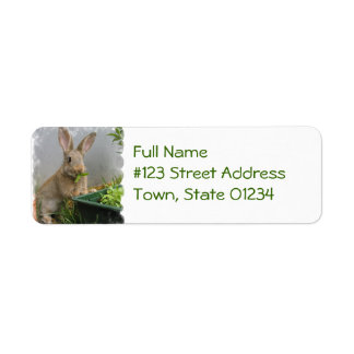 Cottontail Rabbit Mailing Labels