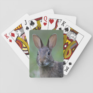 Cottontail Rabbit Playing Cards