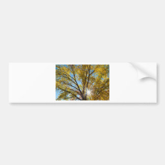 Cottonwood Sunshine Bumper Sticker