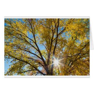 Cottonwood Sunshine Card