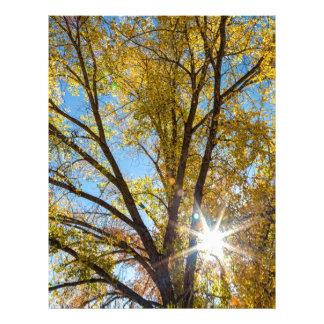 Cottonwood Sunshine Letterhead Design