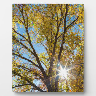 Cottonwood Sunshine Plaque