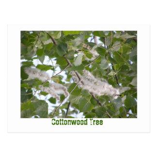 Cottonwood Tree Postcard