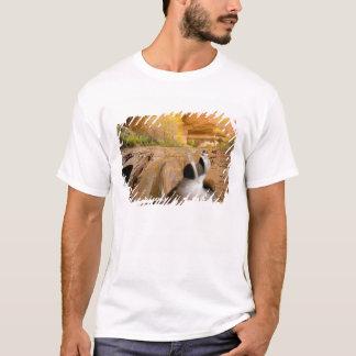 Cottonwoods in Autumn, Coyote Gulch, Glen T-Shirt