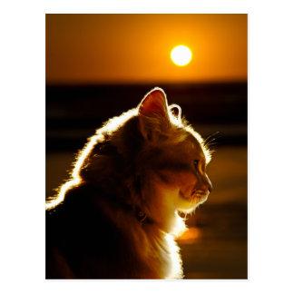 Coucher du soleil de chats cartes postales