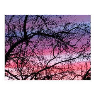 Coucher du soleil rose et pourpre carte postale