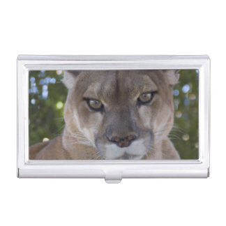 Cougar Business Card Holder