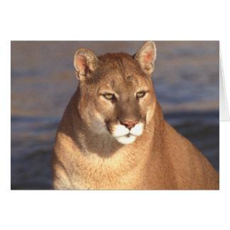 Cougar Face Card