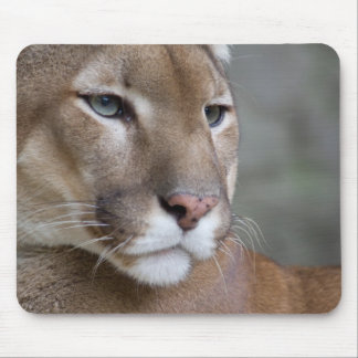 COUGAR face eyes macro cats wild Mouse Pad
