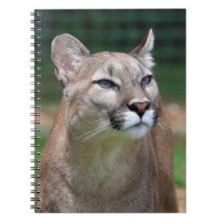 Cougar, mountain lion beautiful photo notebook