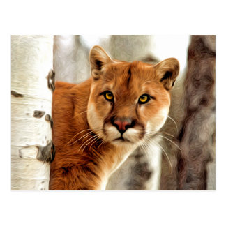 Cougar Photo Painting Postcard