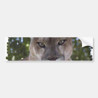 Cougar Pounce Bumper Sticker