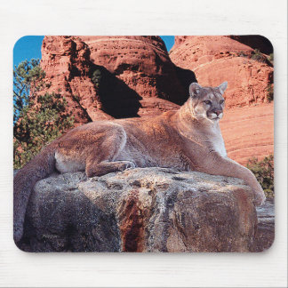 Cougar Resting on Rock - Mouse Pad