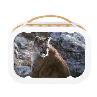 Cougar sitting lunch box