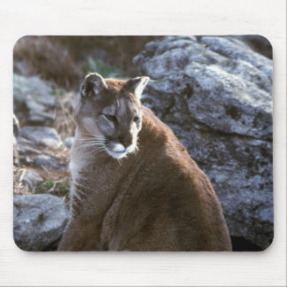 Cougar sitting mouse pad