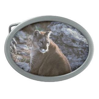 Cougar sitting oval belt buckle