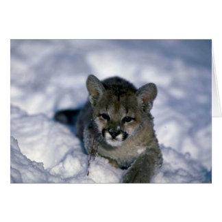 Cougar-small cub on snow card