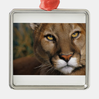 Cougar Stare Metal Ornament