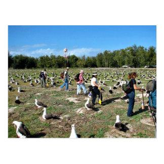 Counting Laysan Albatross Nests Postcard