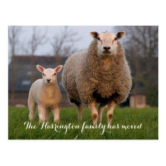 Country Farm Sheep Moving Announcement Postcard