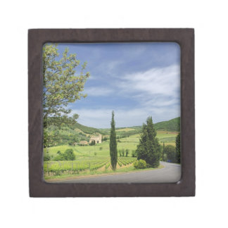 Country road curving between cypress trees in premium jewelry box
