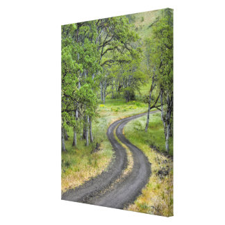 Country road through trees, Oregon Canvas Print