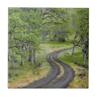 Country road through trees, Oregon Ceramic Tile