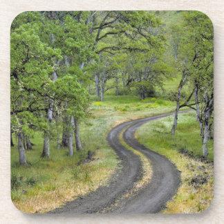 Country road through trees, Oregon Coaster
