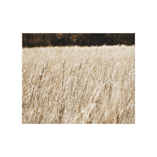 Country View Stretched Canvas Prints