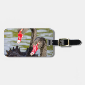 Couple black swans luggage tag