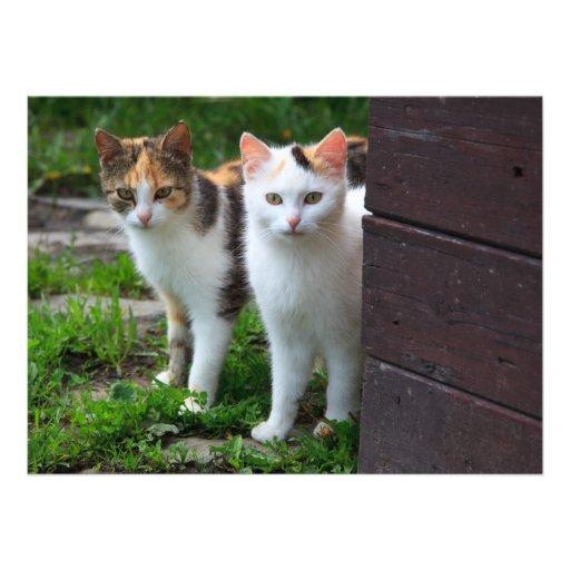 Couples mignons de chat de Kitty Invitations