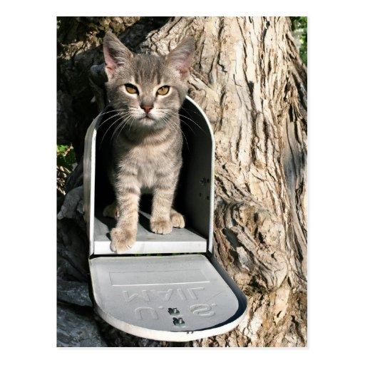 Courrier de chaton carte postale