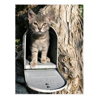 Courrier de chaton cartes postales