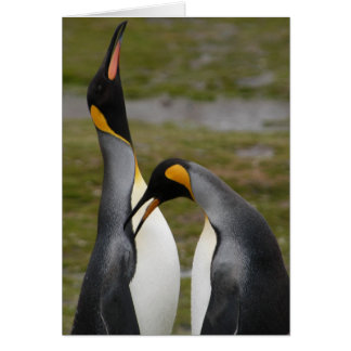 Courting King Penguins Card