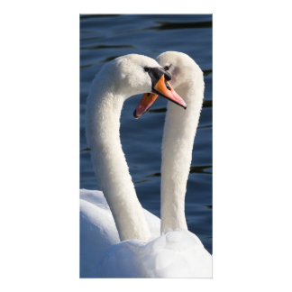Courting Swans Customized Photo Card
