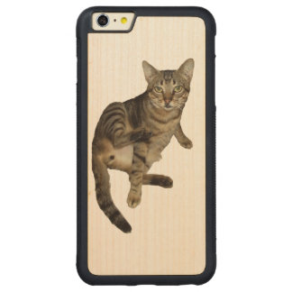 Cover iPhone wood Charming Cat