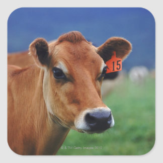 cow 2 square sticker