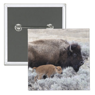 Cow and Calf Bison, Yellowstone 2 2 Inch Square Button