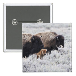 Cow and Calf Bison, Yellowstone 2 Inch Square Button