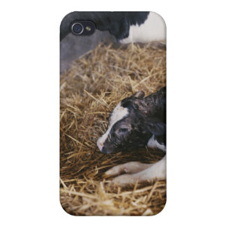 Cow and Calf in Hay Cases For iPhone 4