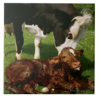 Cow and newborn calf ceramic tiles