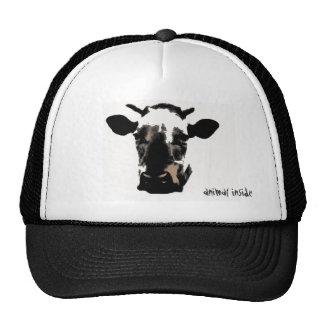 Cow animal inside trucker hat
