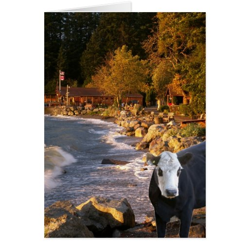 Cow at the Cabins Greeting Card