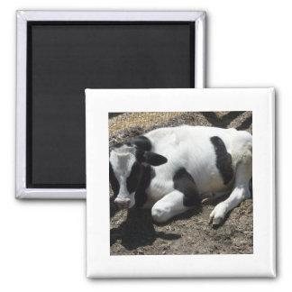cow,baby fridge magnet
