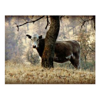 Cow behind Tree Postcard